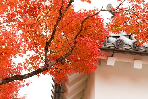 Autumnal view, November 24 #1