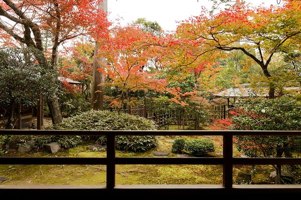 Autumnal view, November 24 #7
