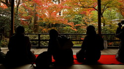 Autumnal view, November 24 #8