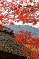 Autumnal view, December 1 #2