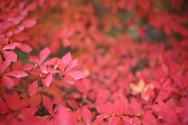 Autumnal view, December 1 #3
