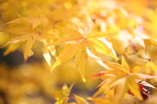 Autumnal view, December 1 #6