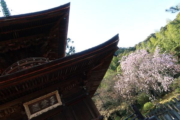 under the pagoda