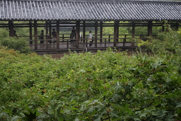 a rainy day at 東福寺 #3