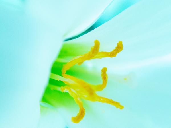 bluish white