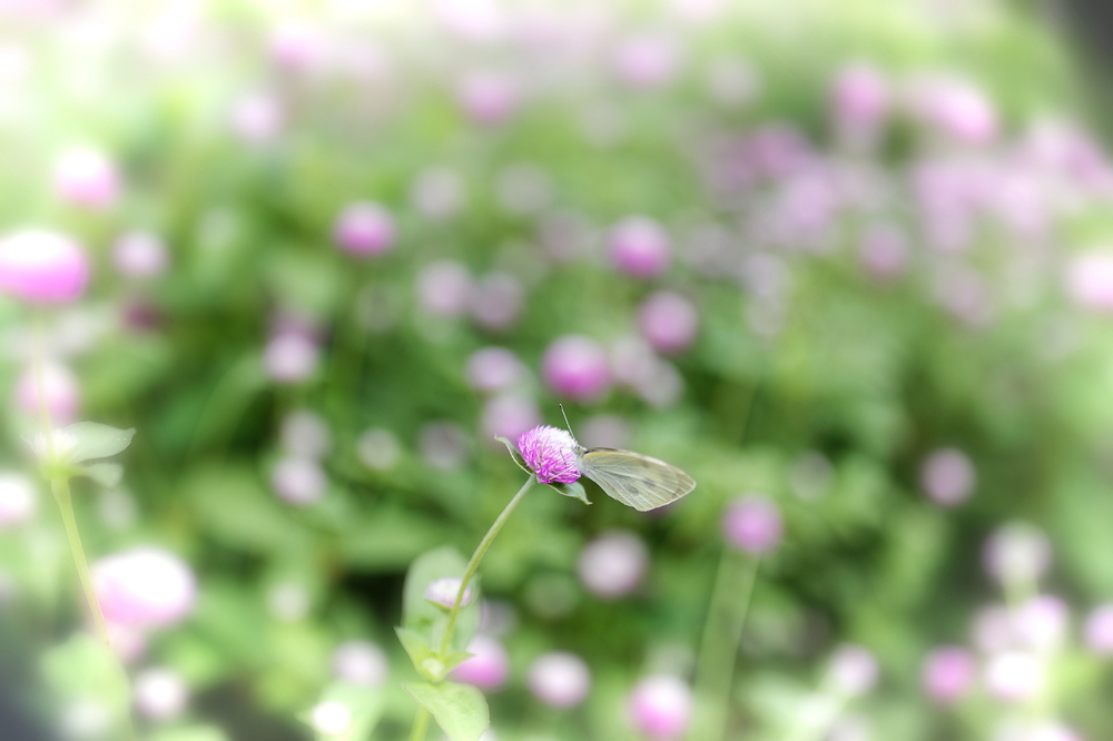 Does the butterfly like bokeh ?