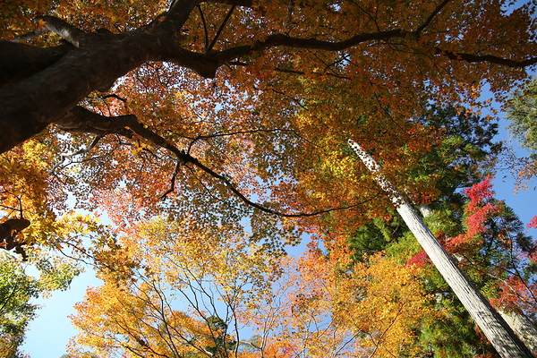 look up at autumn