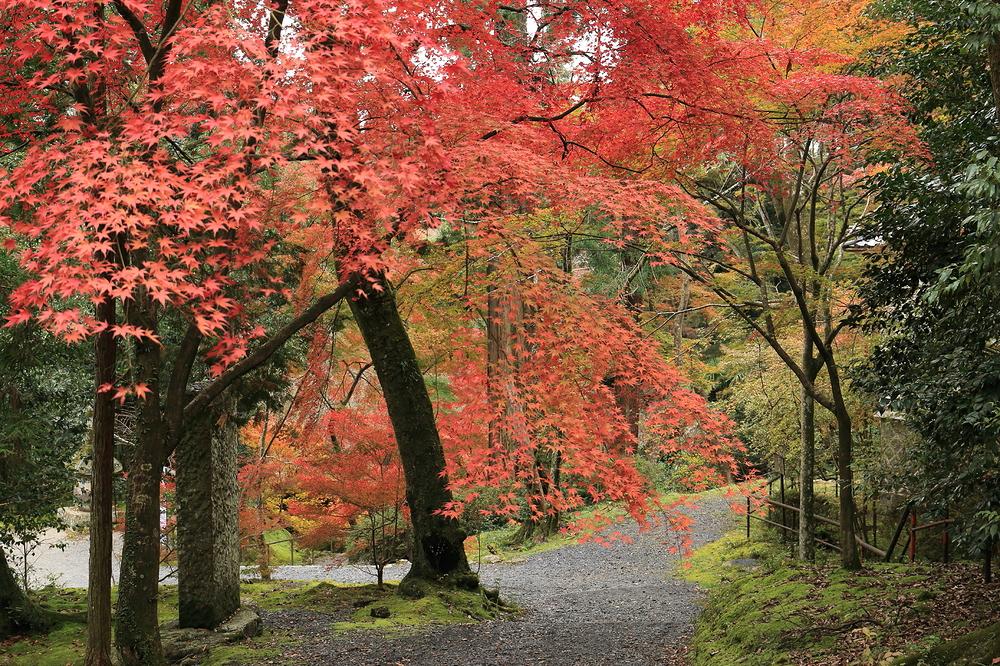 colored path