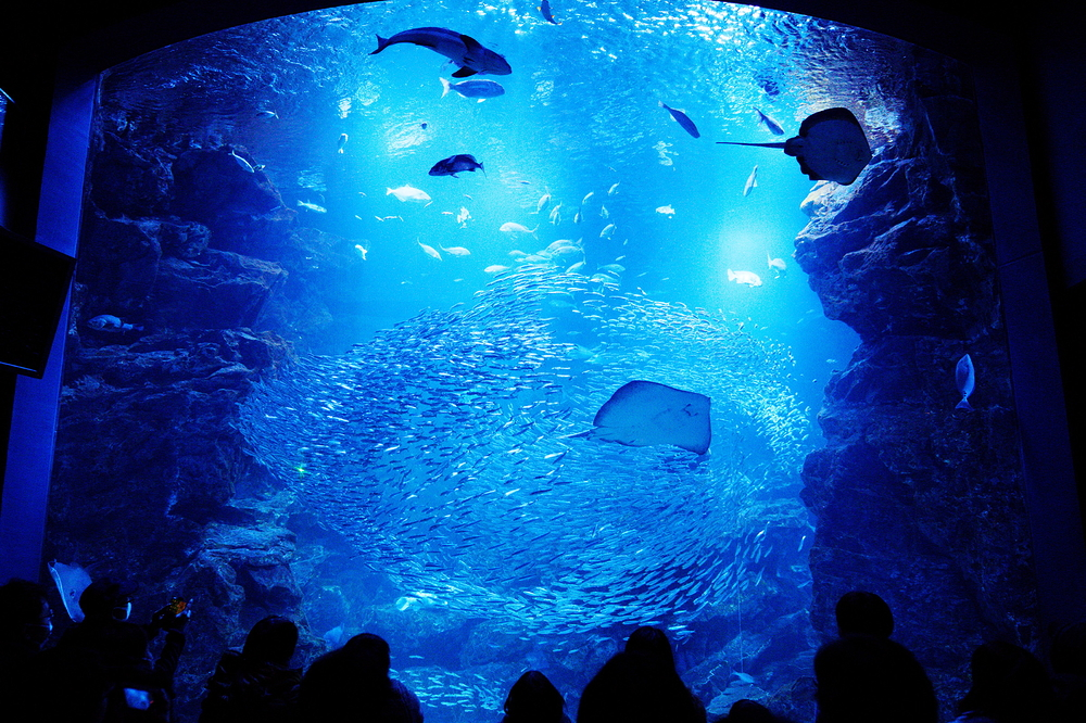 aquarium #4