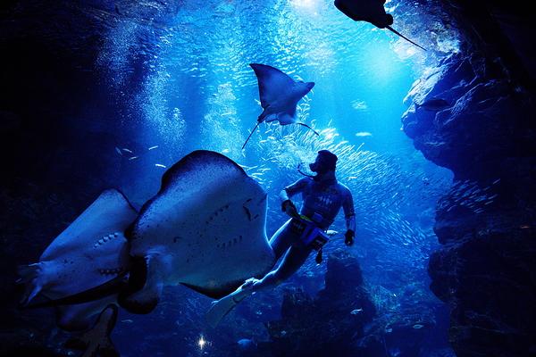 aquarium #5