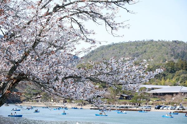 嵐山 ARASHIYAMA #1