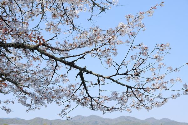 嵐山 ARASHIYAMA #3