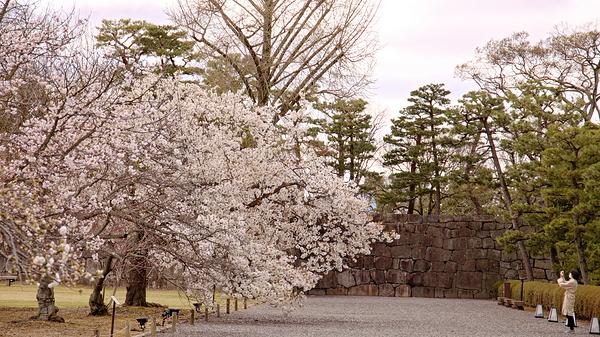 二条城 Nijo-jo Castle #4