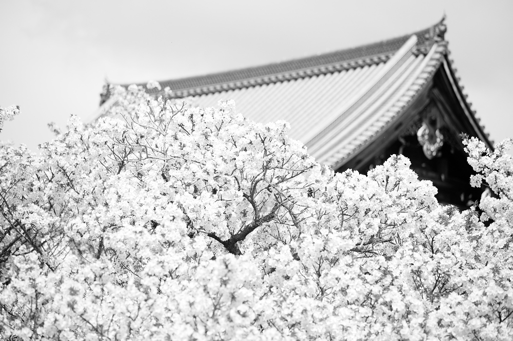 cloud of blossoms #2