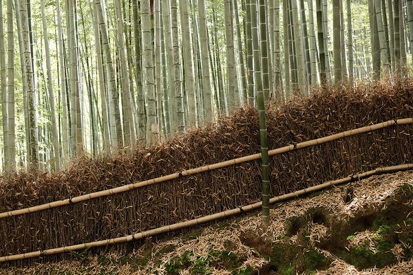 bamboo bush #2