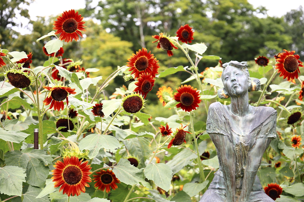 The sunflowers admire the girl.