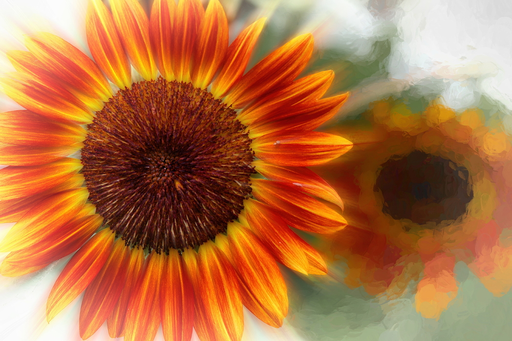 Play with sunflowers #1