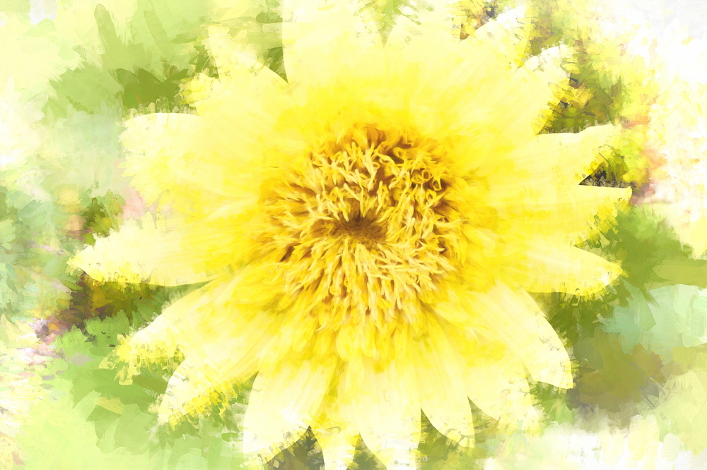 Play with sunflowers #2
