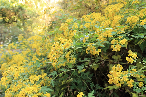 autumn flowers #5