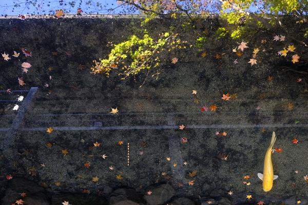 autumn leaves 2020 #5