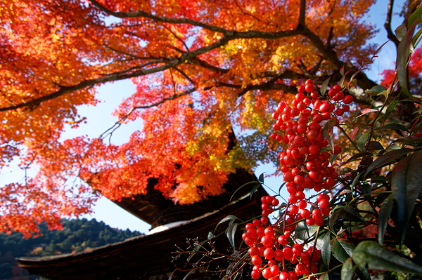 autumn leaves 2020 #8
