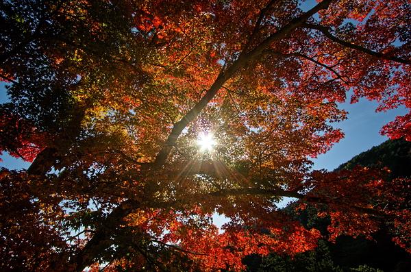 autumn leaves 2020 #9
