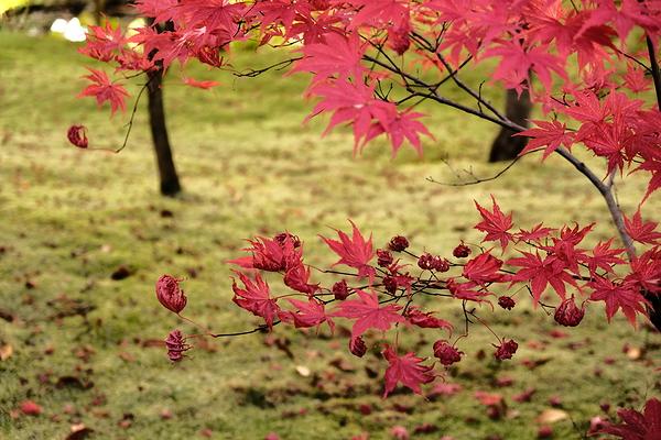 autumn leaves 2020 #12