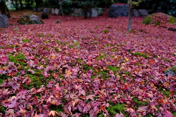 autumn leaves 2020 #13