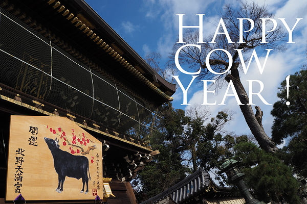 Happy Cow Year #1