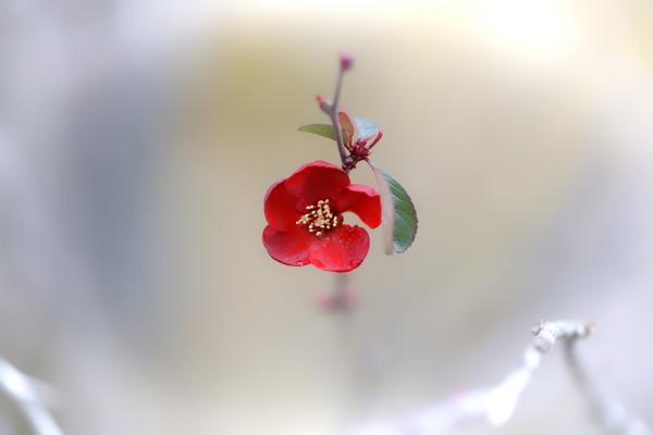 Tenryu-ji #11