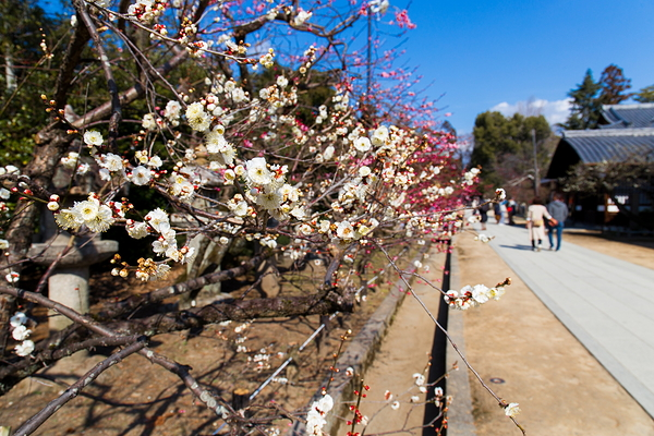 Have a date  in plum blossoms