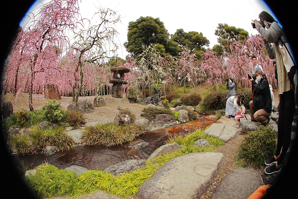 plum spring #2