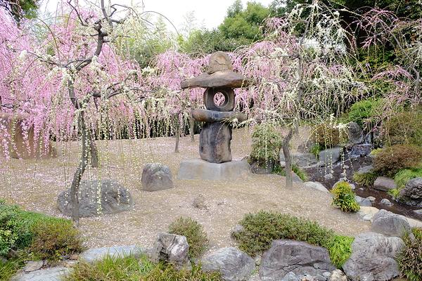 plum spring #4