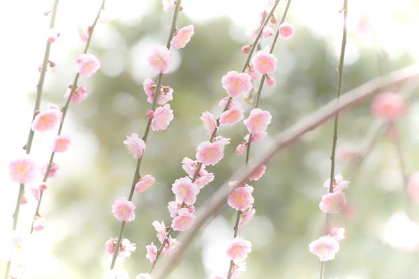 plum spring #9