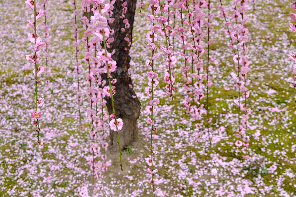plum spring #10