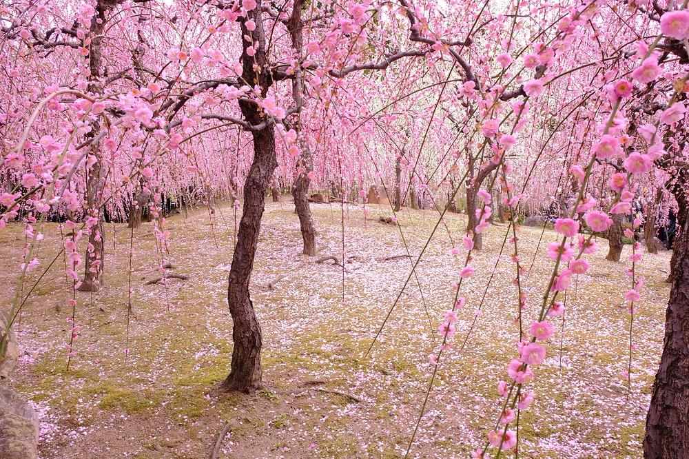 plum spring #11