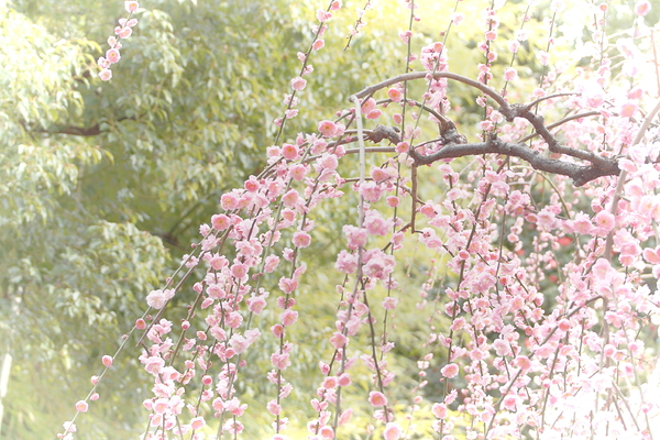 plum spring #12