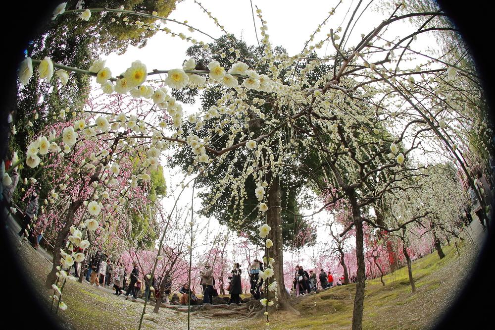 plum spring #14