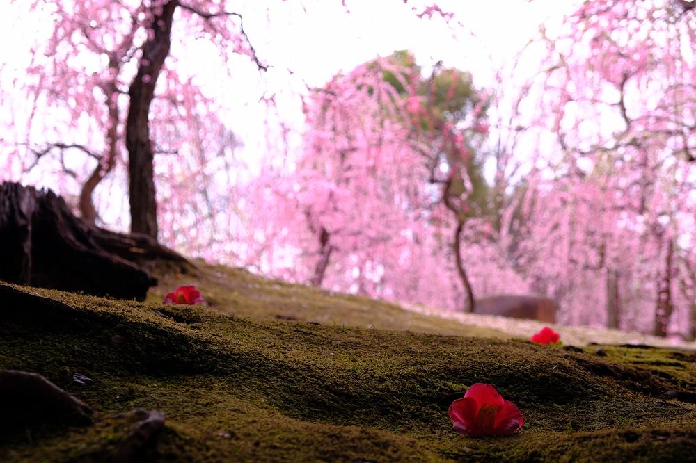 plum spring #17
