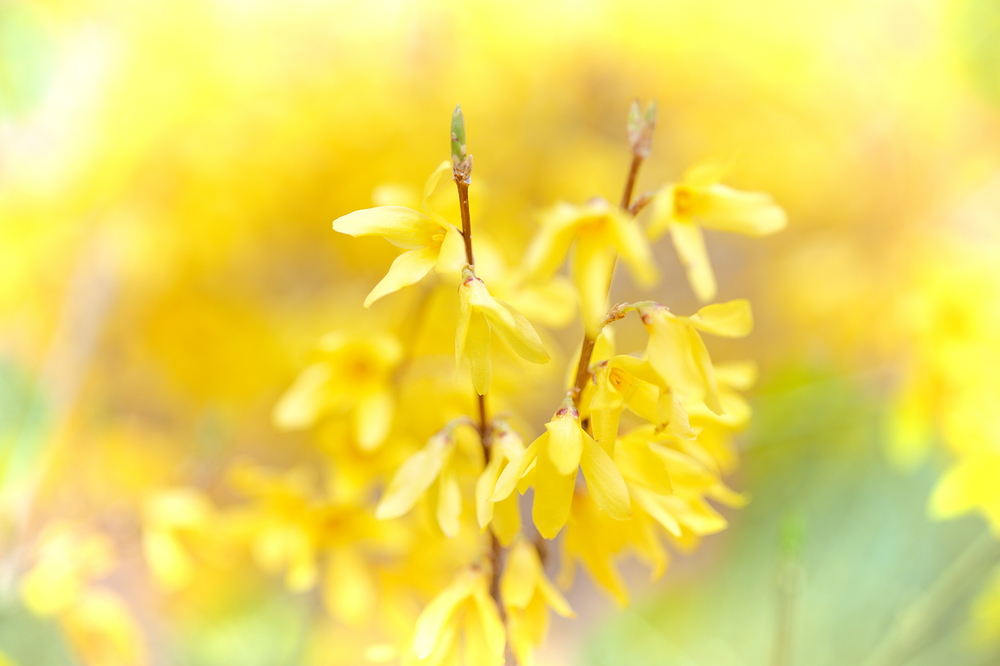 spring yellow #3