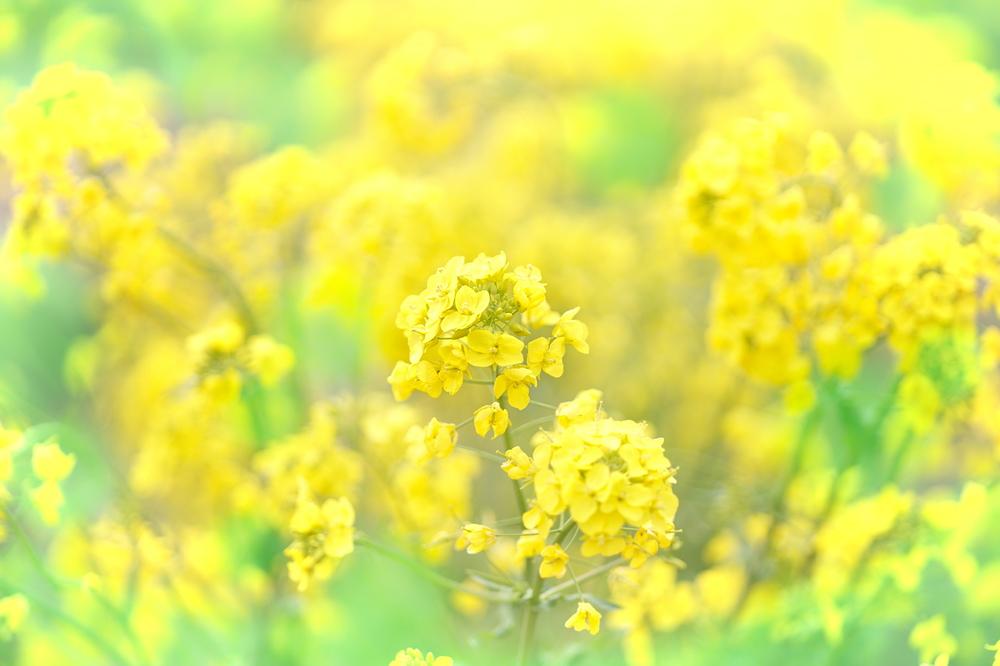 spring yellow #5