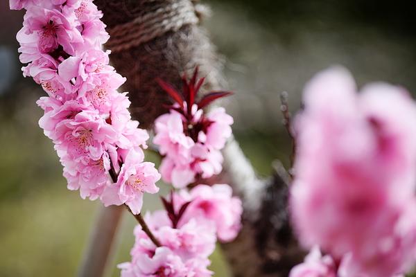 spring pink #1