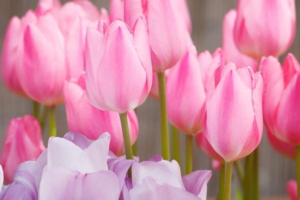 spring pink #2