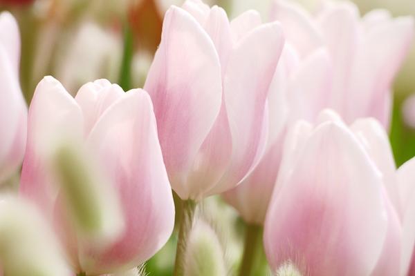 spring pink #3