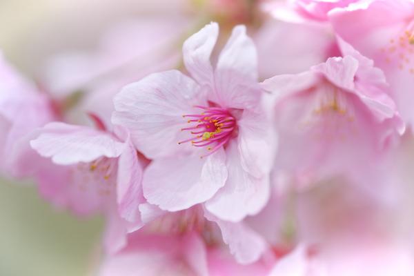 spring pink #4