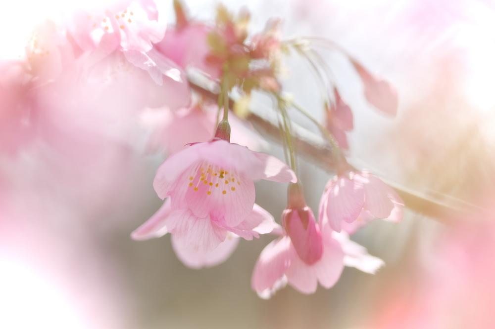 spring pink #5
