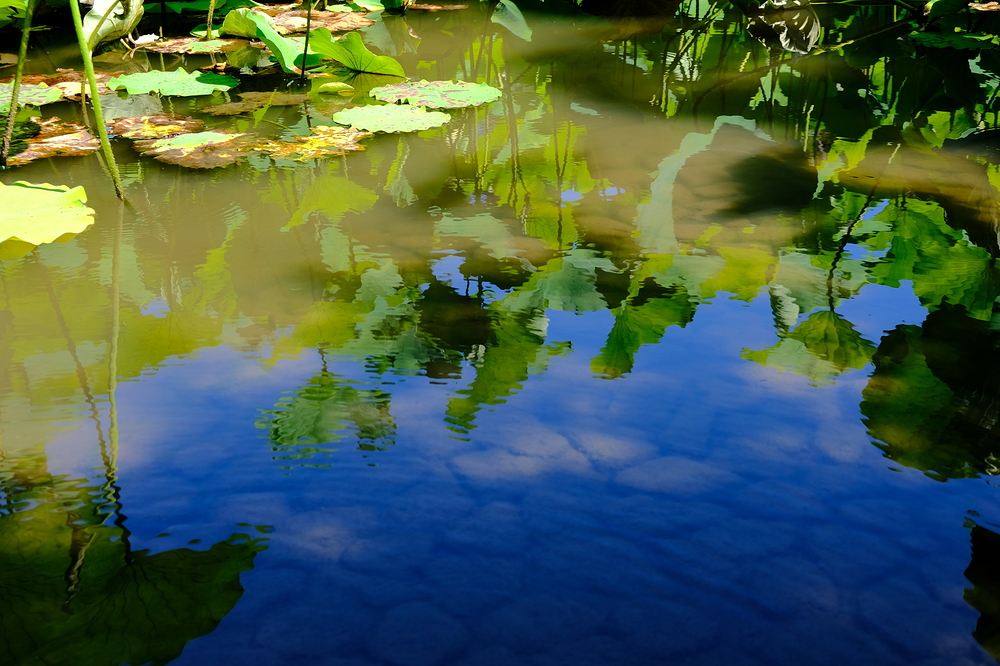 hot summer lotus #10