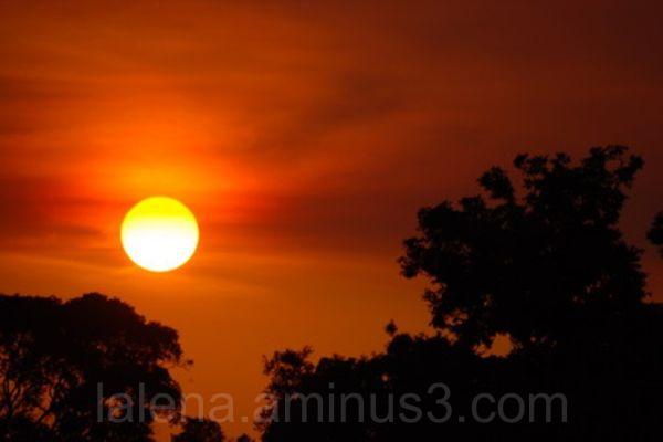 Red in Pantanal