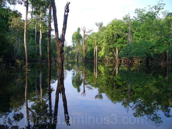 Mirror in nature