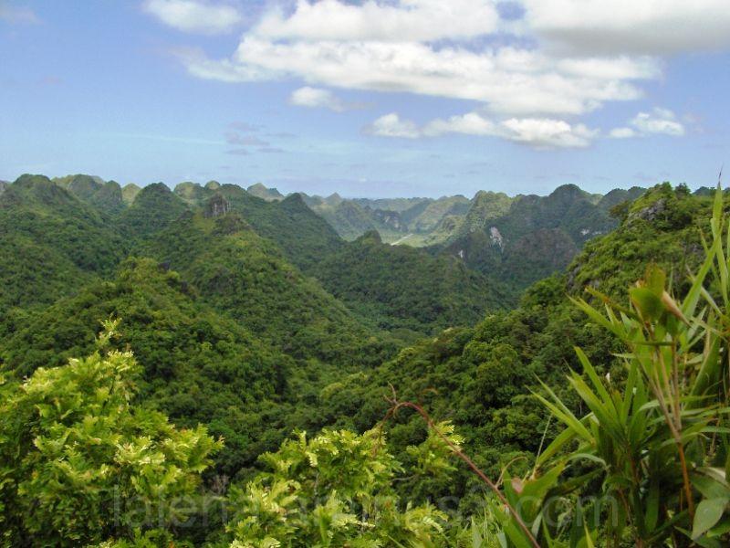 Selva Cat Ba en la Bahia de Halong, Vietnam
